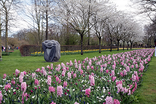 1-Tulipa-violacea