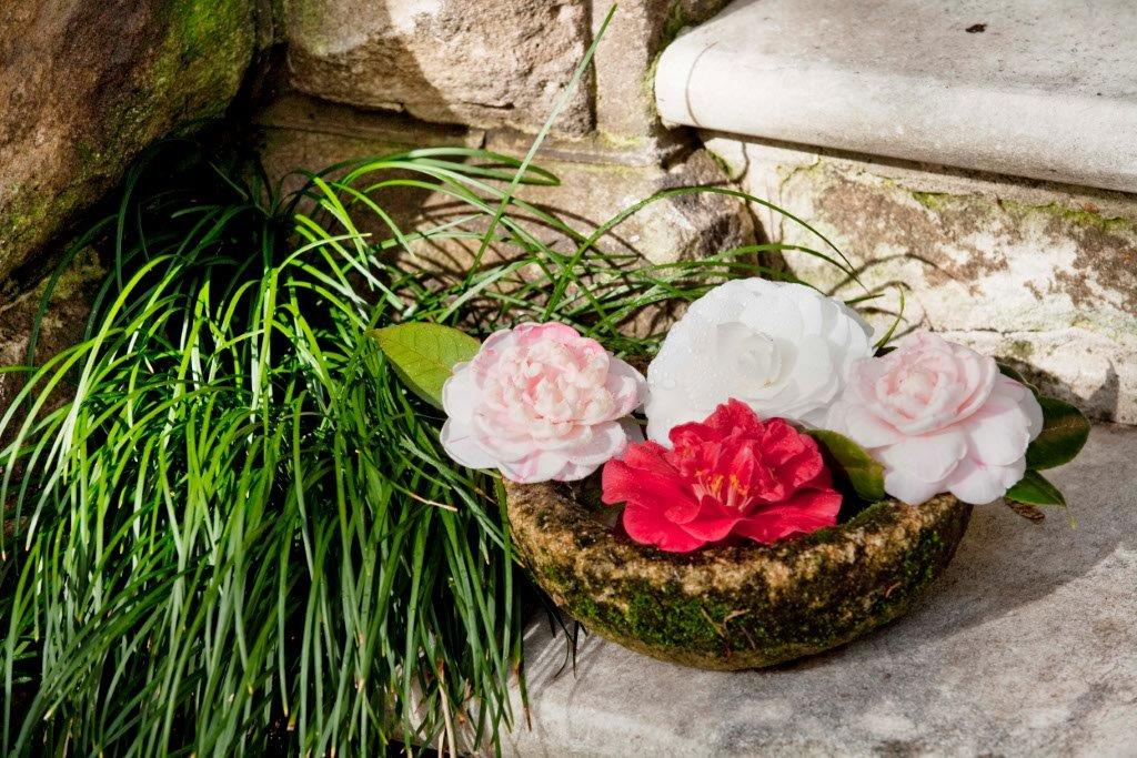 1-camellia japonica arrangement