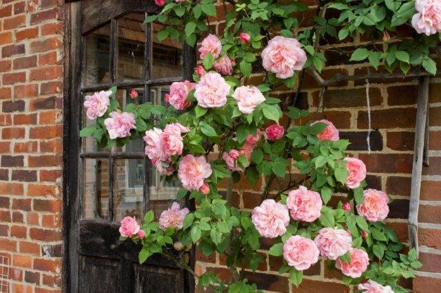 7-Rosa-Lady-Waterlow2
