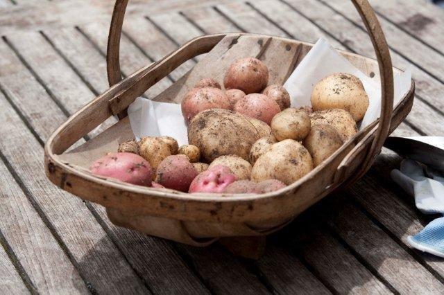 9 Potatoes