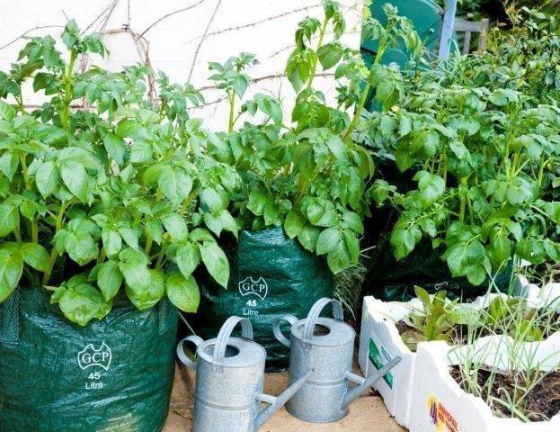 9b potatoes in grow bags